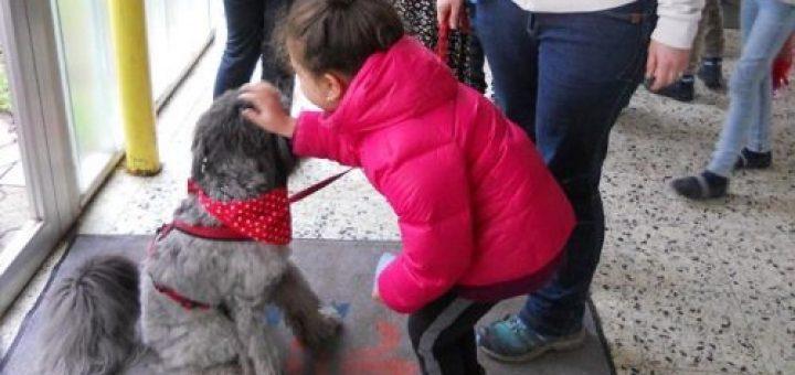 Kuchen Fur Unseren Schulhund Lina Im Vogelsang